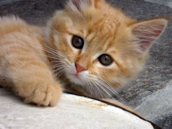 Why sick kitten