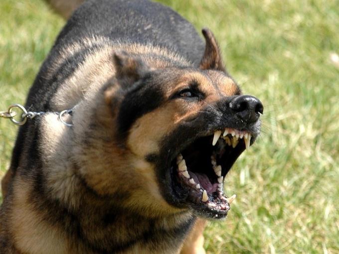 Как успокоить лающую собаку