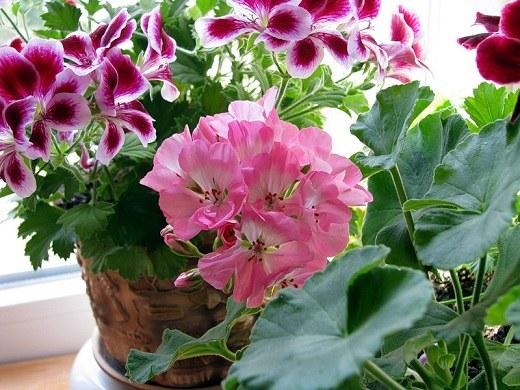 Какие комнатные цветы завести