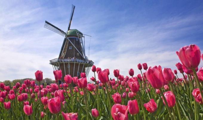 Как поехать в Голландию