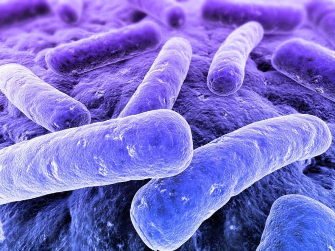 Какие существуют виды бактерий