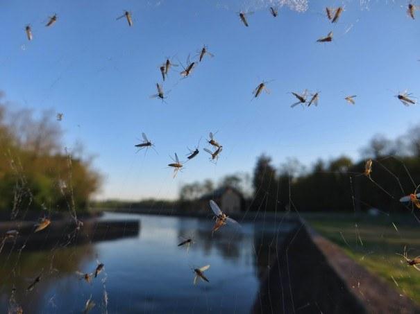 Западня для насекомых
