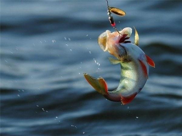 Как завязывать рыболовные узлы