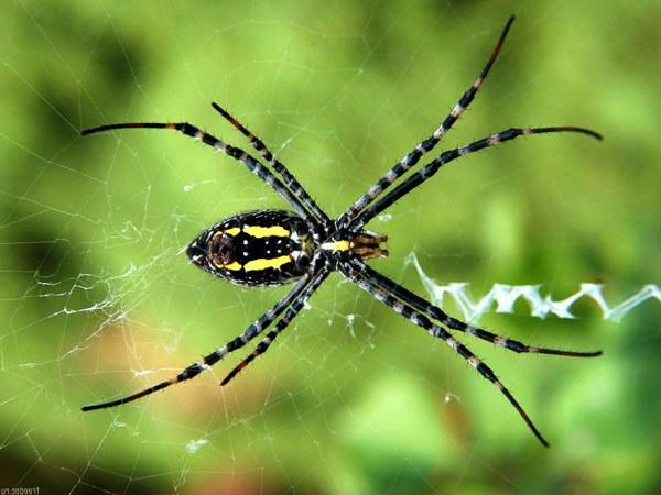 Как бороться с пауками?