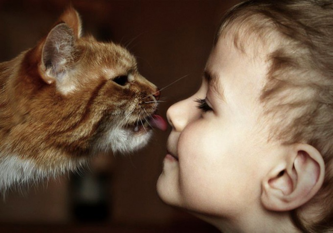 От каких болезней лечат кошки