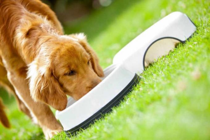 Как кормить собаку в 2018 году