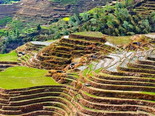 Китай. Рисовые террасы Лунцзи