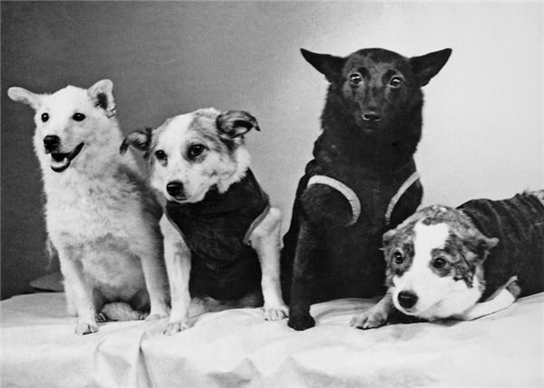 Первые собаки-космонавты