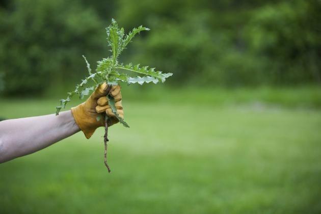 Сорняки губят полезные культуры.