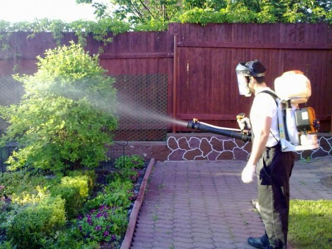 Spraying Bordeaux liquid