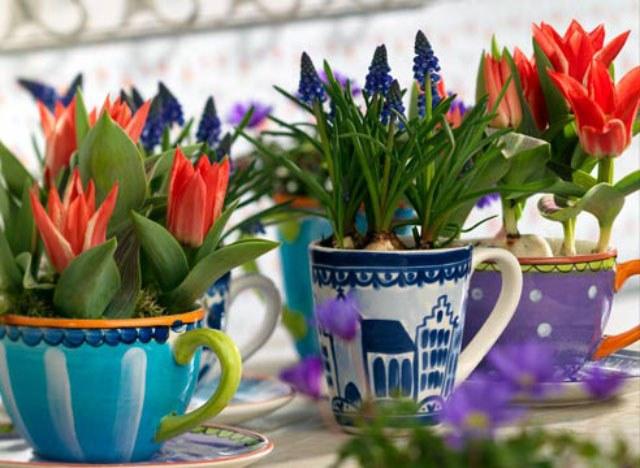 Выращивание тюльпанов в домашних условиях: посадка