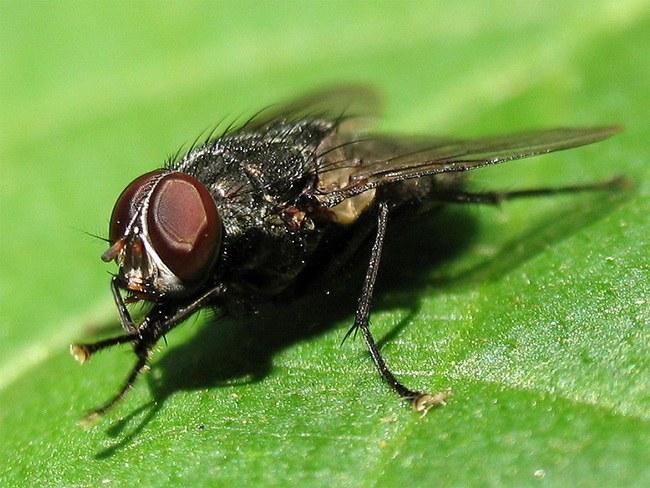 Куда мухи и комары исчезают зимой
