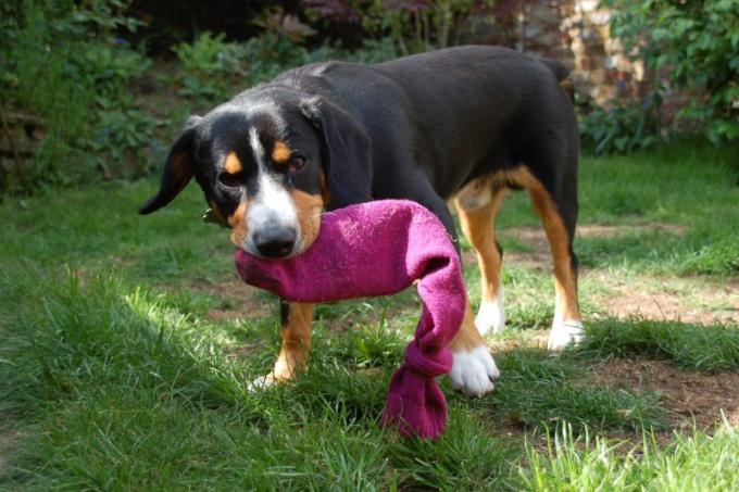 Самодельная игрушка для собаки