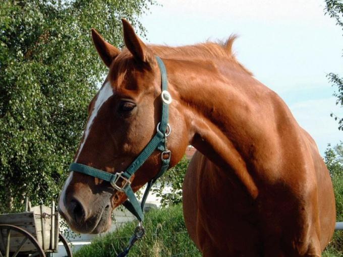 Густав Миллер отводит снам с лошадьми два листа своего сонника!