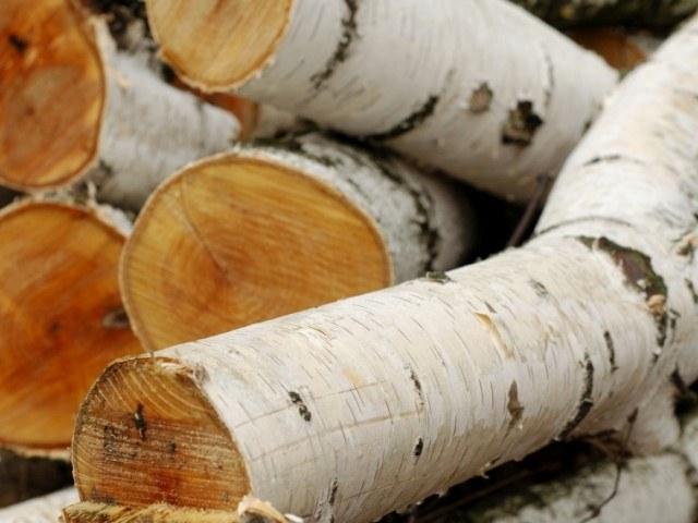 Какие дрова лучше брать для приготовления шашлыка
