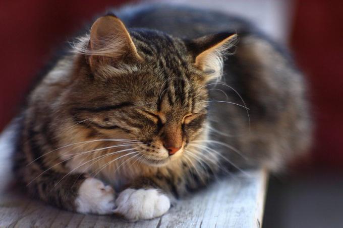 Перед стерилизацией кошки хозяин должен узнать все тонкости предстоящей операции