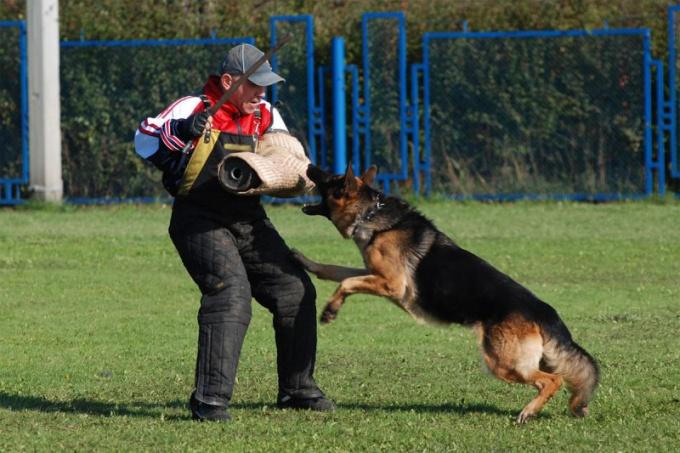 Дрессировка собаки заключается в обучении ее дисциплине