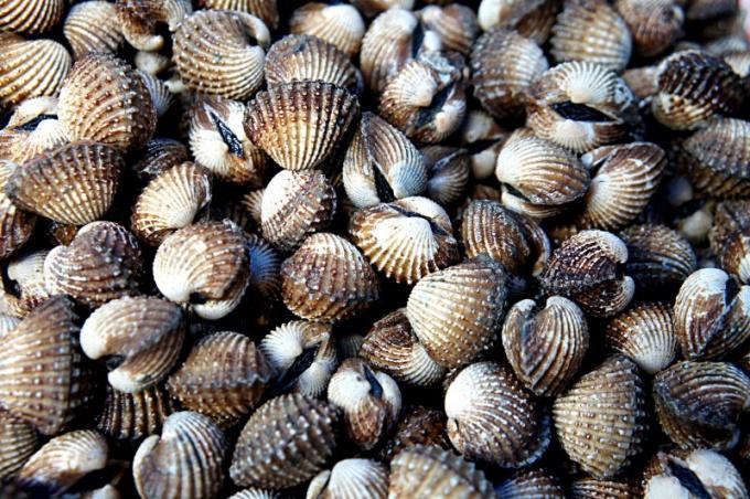 Жареные морские гребешки - изысканный деликатес с ореховым запахом