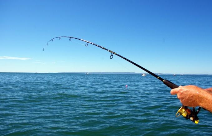 Ловля рыбы донкой