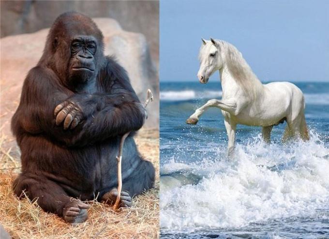 Восточный гороскоп совместимости: Лошадь и Обезьяна