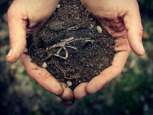 Плодородная земля во сне - к удаче!