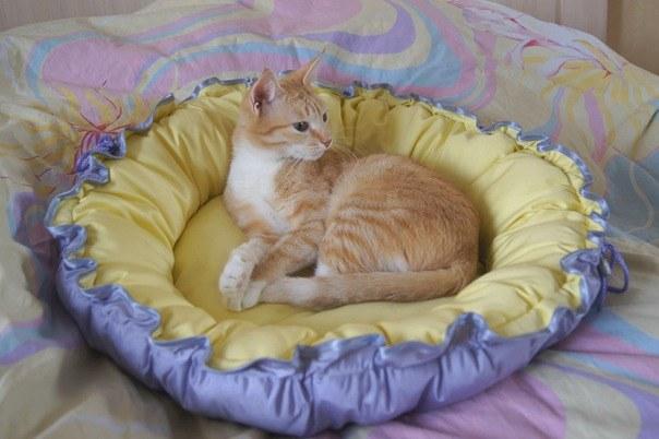 Самодельная лежанка для кошек