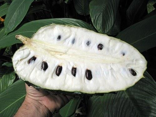 Гуанабана: польза экзотического фрукта