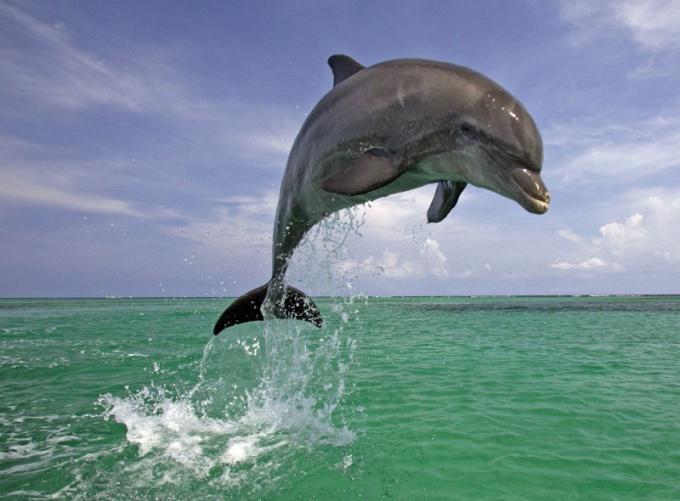 Дельфины - одни из самых умных животных в мире!