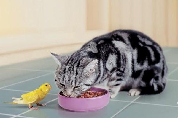Чем лучше всего кормить кошек