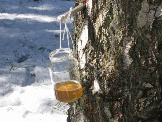 Как законсервировать березовый сок