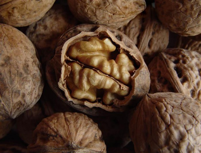 Tincture of partitions walnut - natural medicine