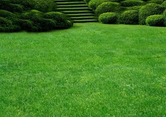 Посадка газона своими руками - основные работы