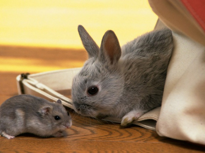 Oriental horoscope compatibility Rat and Rabbit