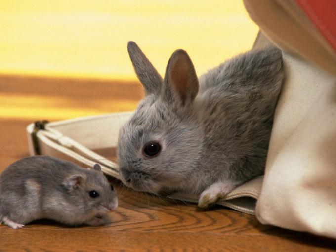 Восточный гороскоп совместимости: Крыса и Кролик