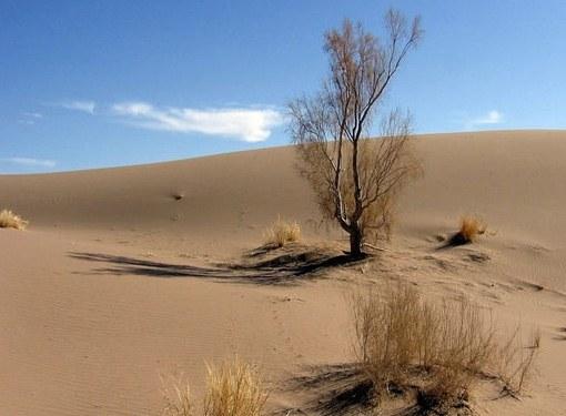 У какого растения самые глубокие корни