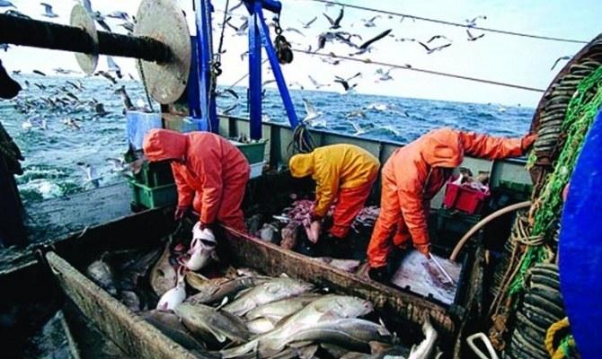 Морской заяц: рыба из Тихого океана