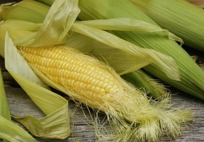 Кукурузные рыльца. Использование и противопоказания