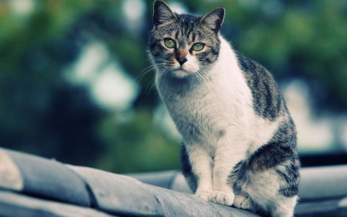 Кошка плохо ест: возможные причины