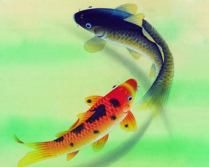 Разведение рыб в домашних условиях как бизнес