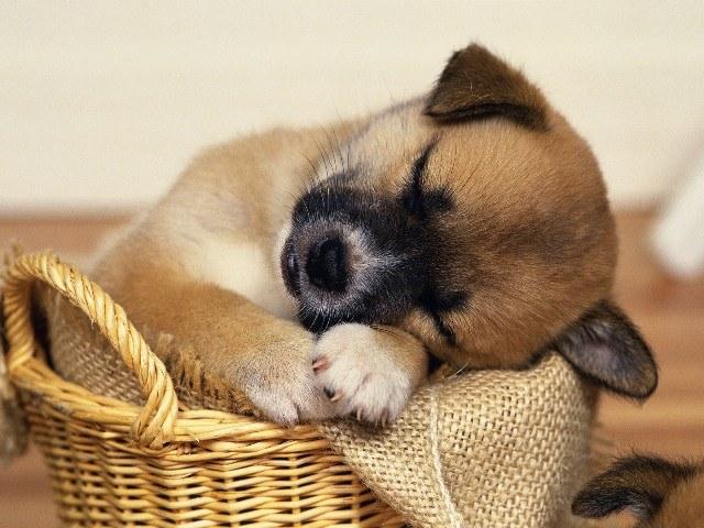 Как правильно организовать удобное спальное место для собаки