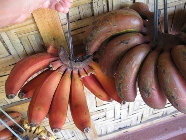 Красный банан: экзотический фрукт из Коста-Рики