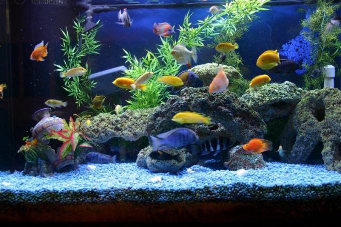 Донный фильтр обеспечит чистоту воды в аквариуме
