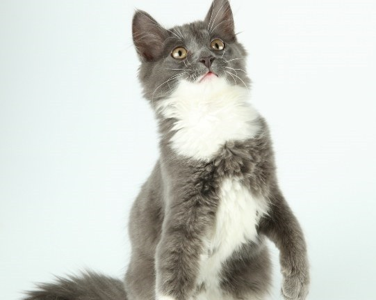 Зачем коты просятся на руки