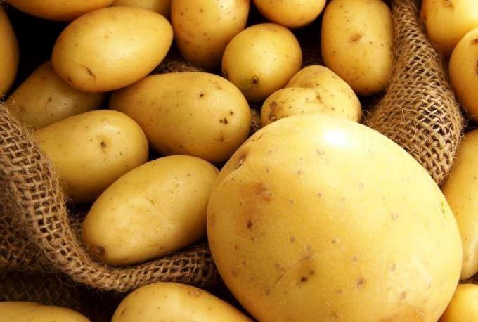 """""""Земляное яблоко"""" или картофель,"""