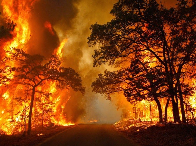 Какими бывают природные пожары