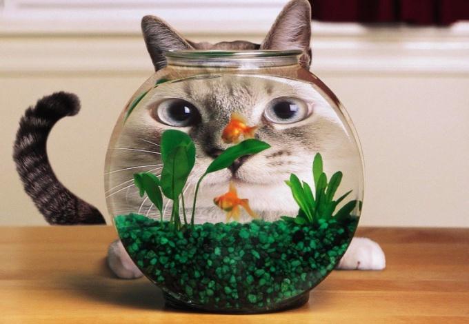 Внутренние фильтры для аквариума: достоинства и недостатки