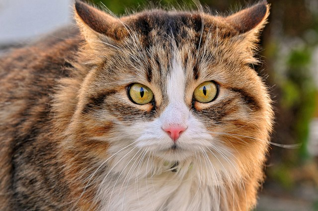 Умница кошка