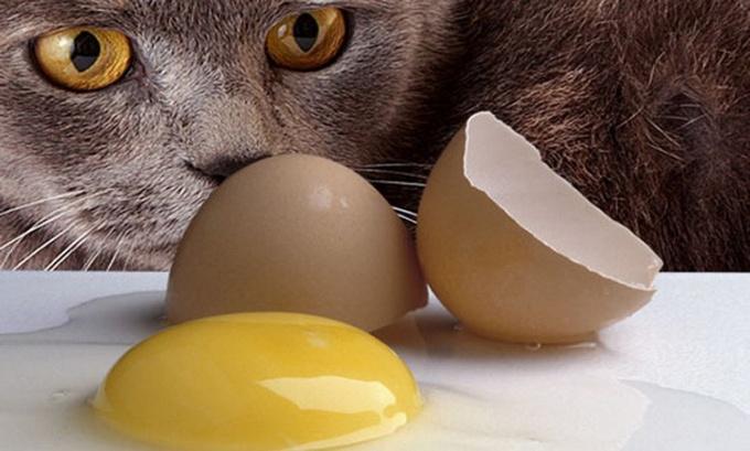 Вредно ли кошкам есть яйца