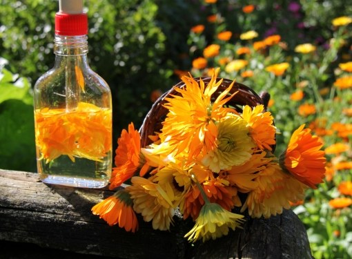 Calendula tincture – a real panacea for anyone who has skin problems. Its composition is simple – calendula flowers, infused in alcohol