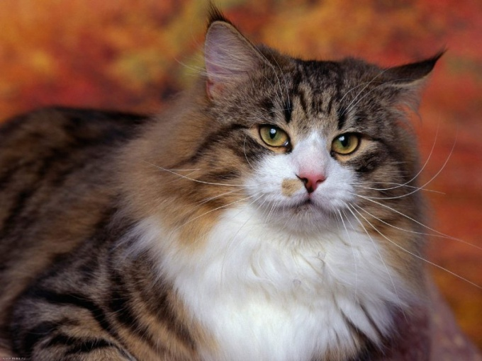 How to change the behavior of cats after castration